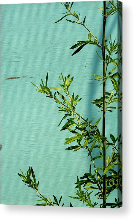 Green Acrylic Print featuring the photograph Green On Aqua 1 by Art Ferrier