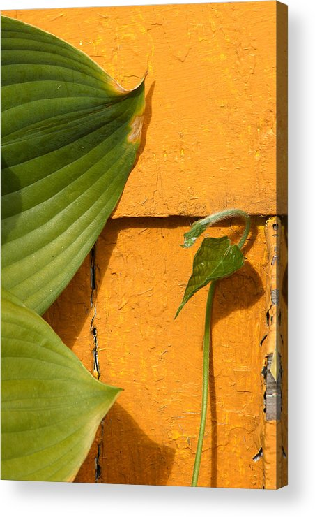 Color Acrylic Print featuring the photograph Green On Orange 4 by Art Ferrier