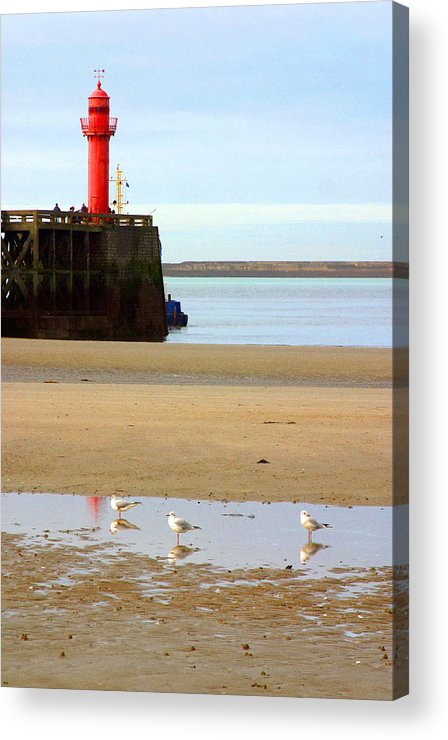 Jez C Self Acrylic Print featuring the photograph Gulled 3 by Jez C Self