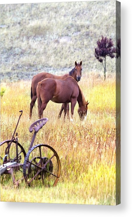 Horses Acrylic Print featuring the photograph Hello by Naman Imagery