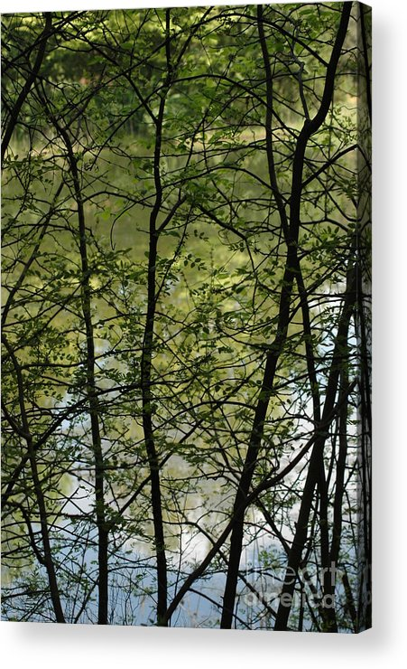 Usa Acrylic Print featuring the photograph Hidden Pond Natural Fence by LeeAnn McLaneGoetz McLaneGoetzStudioLLCcom