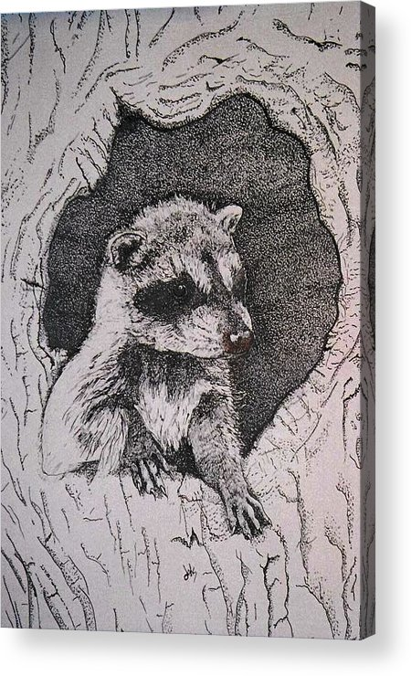 Raccoon Acrylic Print featuring the drawing Home by Debra Sandstrom