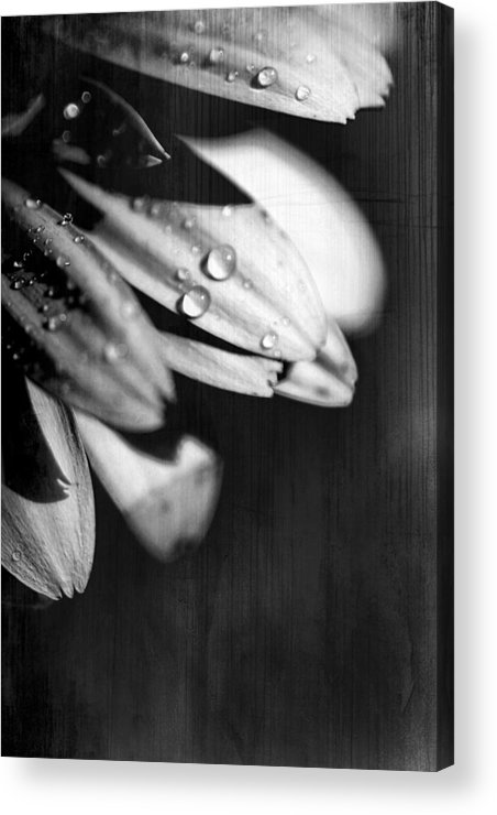 Flowers Acrylic Print featuring the photograph I Am Barely Breathing by Laurie Search