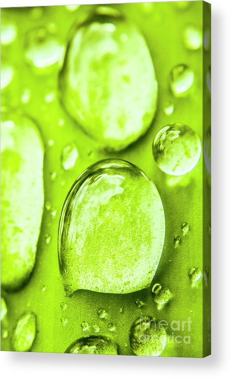 Rain Acrylic Print featuring the photograph In Natural Macro by Jorgo Photography - Wall Art Gallery