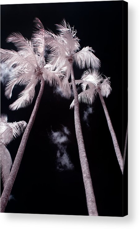 3scape Photos Acrylic Print featuring the photograph Infrared Palm Trees by Adam Romanowicz