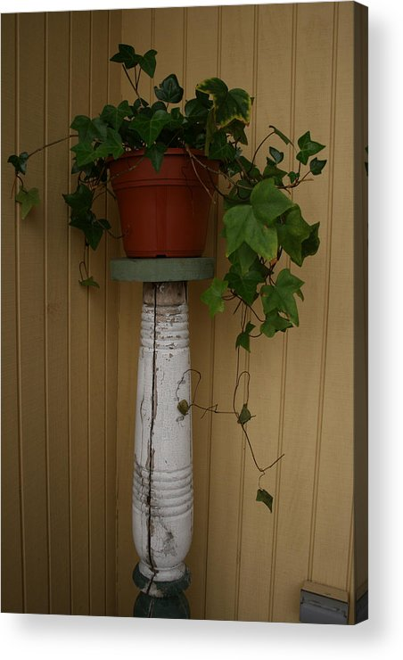 Planter Acrylic Print featuring the photograph Ivy Corner by Alan Rutherford