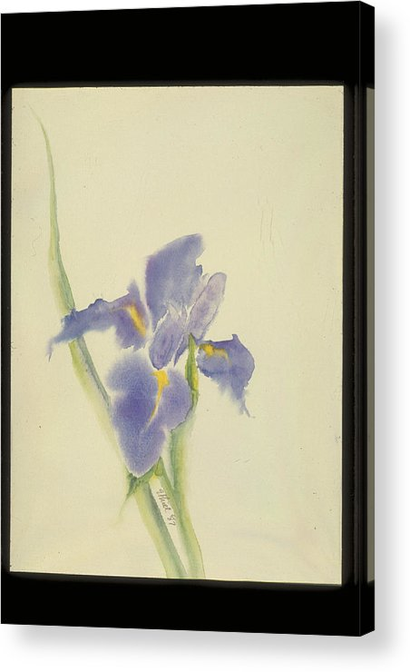 Watercolor Acrylic Print featuring the painting Japanese Iris by Nancy Ethiel