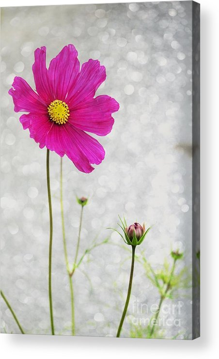 Flower Acrylic Print featuring the photograph L Elancee by Variance Collections