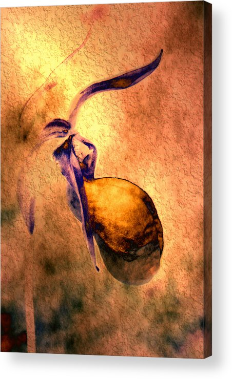 Acrylic Print featuring the photograph Lady Slipper by Roger Soule