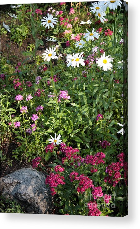 Flowers Acrylic Print featuring the photograph Lake Tahoe Beauties by Carol Groenen