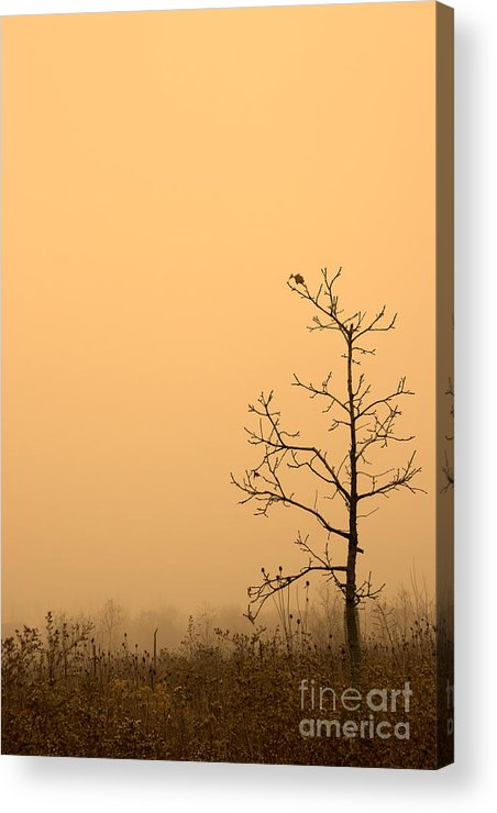 Tree Acrylic Print featuring the photograph Last Leaves by Timothy Johnson