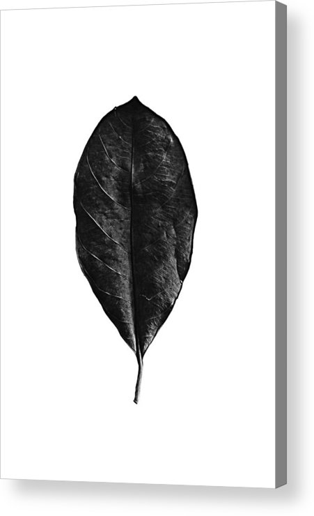 Monochrome Acrylic Print featuring the photograph Leaf 0806 by Pang Saw Wee