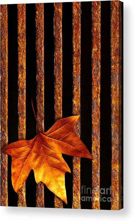 Abstract Acrylic Print featuring the photograph Leaf In Drain by Carlos Caetano