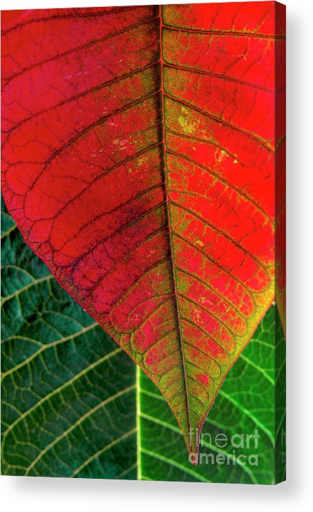 Autumn Acrylic Print featuring the photograph Leafs Macro by Carlos Caetano