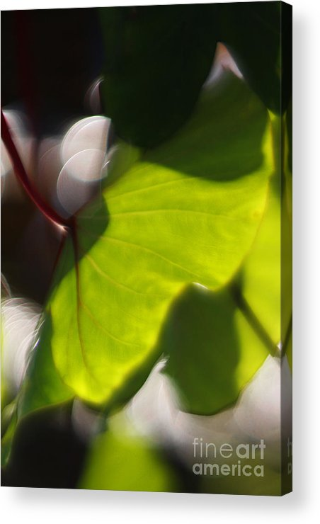 Green Acrylic Print featuring the photograph Light I by Katherine Morgan
