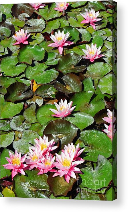 Flower Acrylic Print featuring the photograph Lilly Pads In Bloom by Dennis Hammer