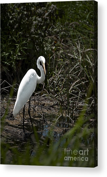 Landscape Acrylic Print featuring the photograph Looking For Lunch by Tamyra Ayles