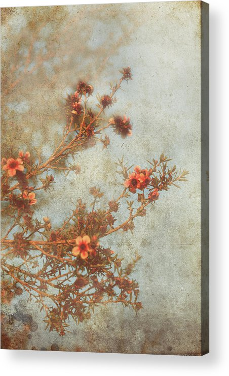Flowers Acrylic Print featuring the photograph Love Is In Bloom by Laurie Search