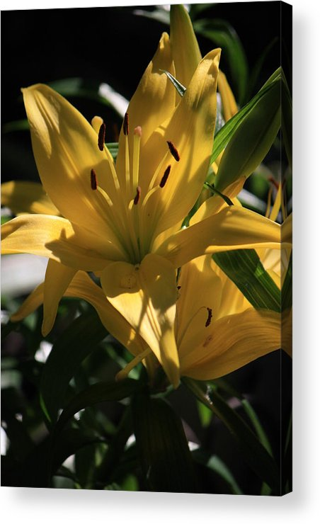 Lilly Acrylic Print featuring the photograph Lover's Lilly II by Mandy Shupp