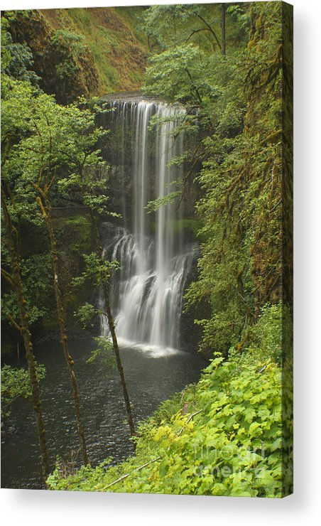 Silver Falls Acrylic Print featuring the photograph Lower South Falls by Idaho Scenic Images Linda Lantzy