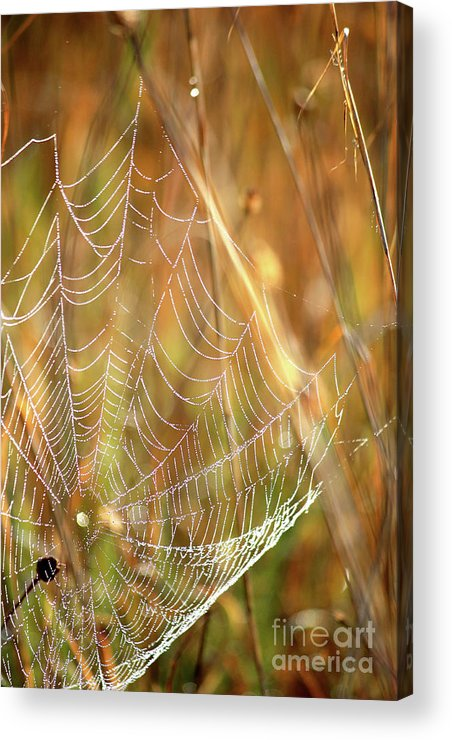 Marsh Acrylic Print featuring the photograph Magic In The Marsh by Carol Groenen