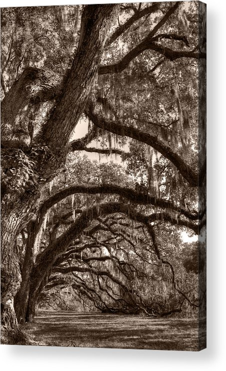 Live Oak Acrylic Print featuring the photograph Magnificant Live Oak Trees by Dustin K Ryan