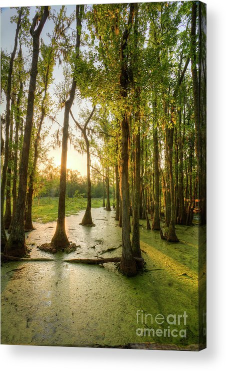 Magnolia Plantation Acrylic Print featuring the photograph Magnolia Plantation Cypress Swamp by Dustin K Ryan