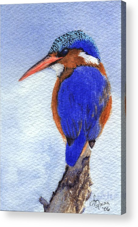 Bird Acrylic Print featuring the painting Malachite Kingfisher by Lynn Quinn