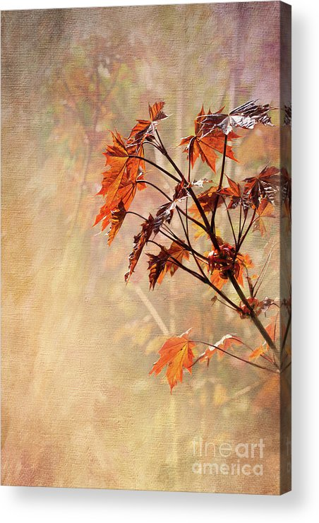 Foliage. Maple Leaves Acrylic Print featuring the digital art Maple Leaves by Liz Alderdice