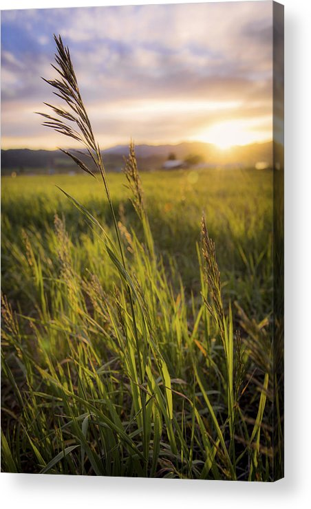 Meadow Light Acrylic Print featuring the photograph Meadow Light by Chad Dutson