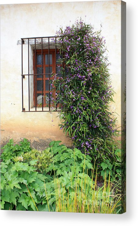 Mission Acrylic Print featuring the photograph Mission Window With Purple Flowers Vertical by Carol Groenen