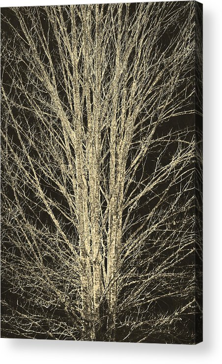 Trees Acrylic Print featuring the photograph Naked by Itai Minovitz