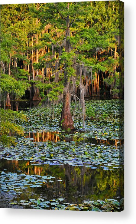 Bog Acrylic Print featuring the photograph Naked by Skip Hunt