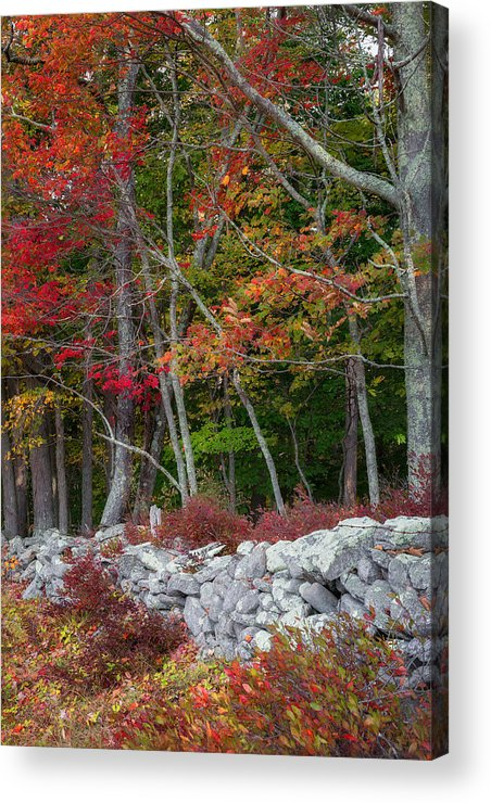New England Stonewall Acrylic Print featuring the photograph New England Stonewall by Bill Wakeley