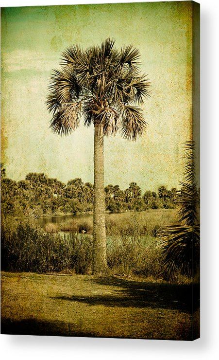 Palm Acrylic Print featuring the photograph Old Florida Palm by Rich Leighton