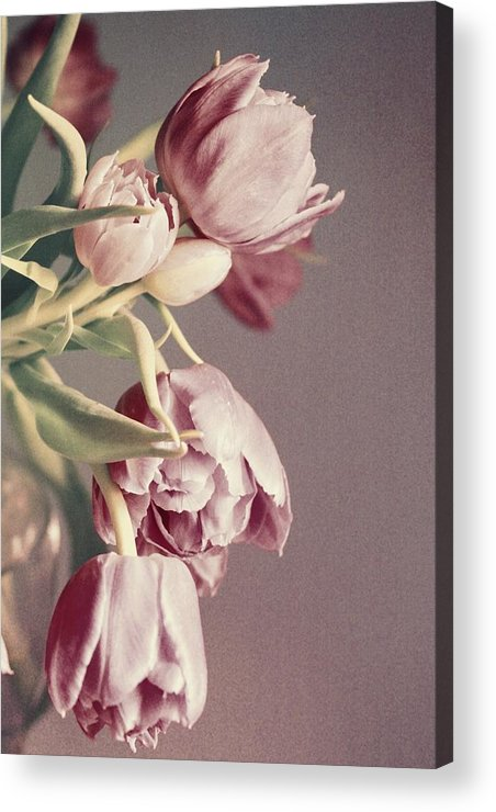 Tulips Acrylic Print featuring the photograph Pale Tulips by Cathie Tyler