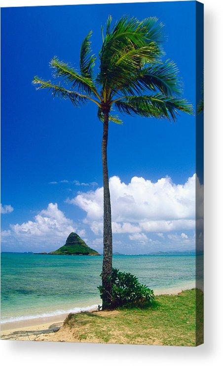 Bay Acrylic Print featuring the photograph Palm Tree On The Beach Kaneohe Bay Oahu Hawaii by George Oze
