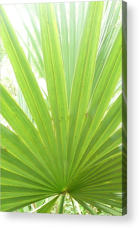 Green Acrylic Print featuring the photograph Palmetto by Kathy Schumann