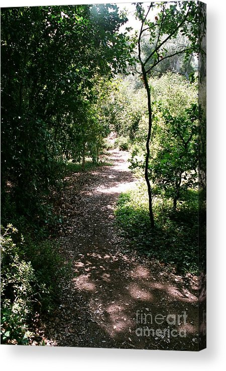 Path Acrylic Print featuring the photograph Path by Dean Triolo