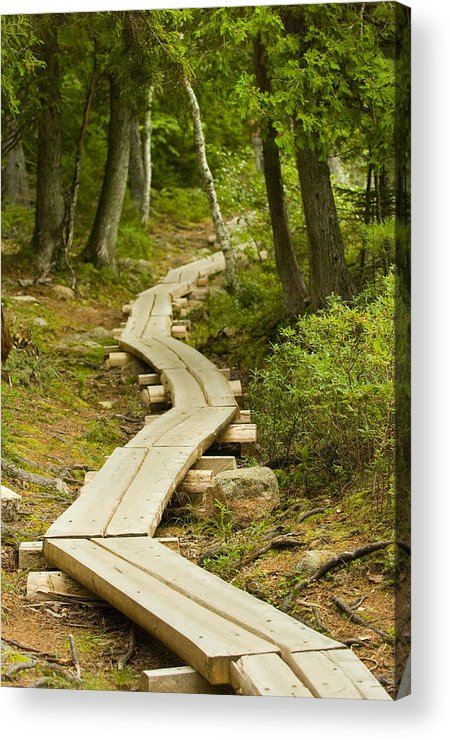 Forest Acrylic Print featuring the photograph Path Into Unknown by Sebastian Musial