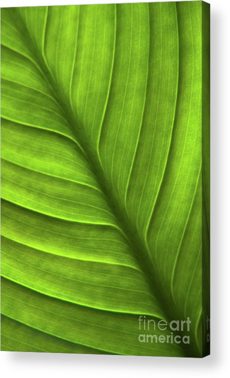Nature Acrylic Print featuring the photograph Peace Lily Leaf by Julia Hiebaum