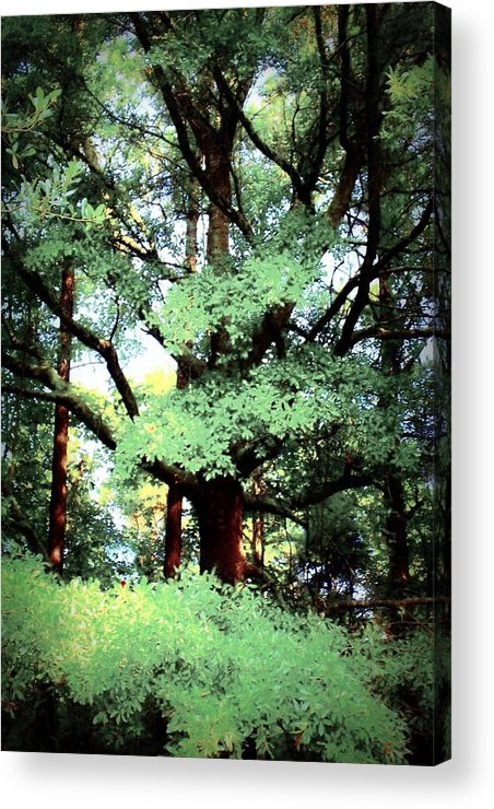 Tree Acrylic Print featuring the photograph Photosynthesis by Jill Tennison