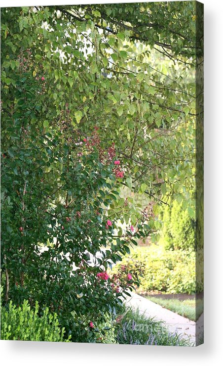 Path Acrylic Print featuring the photograph Pink And Green Path by Nadine Rippelmeyer