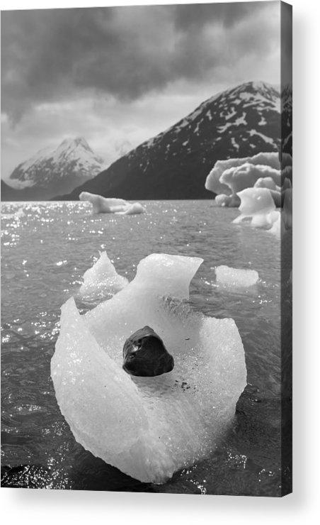Alaska Acrylic Print featuring the photograph Portage Glacier, Ice Basket by Scott Slone