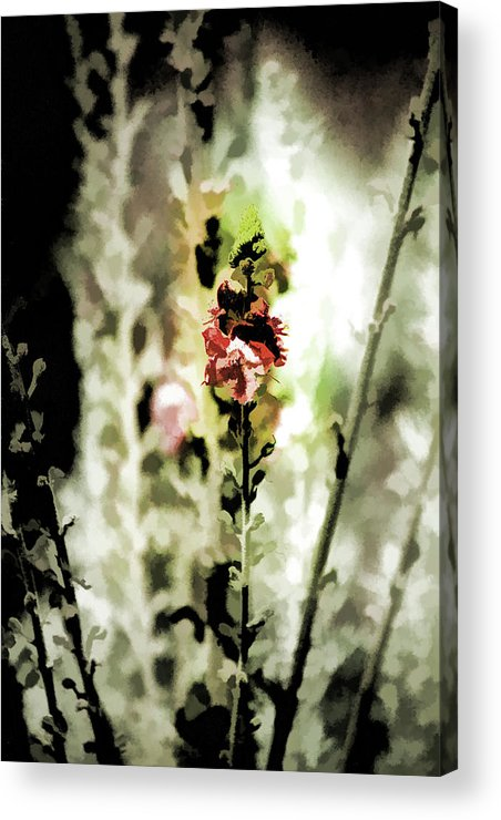 Tall Flower Stalks Acrylic Print featuring the photograph Pretty Perennial by Bonnie Bruno
