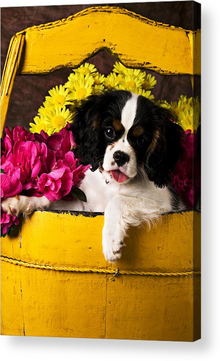 Puppy Dog Cute Doggy Domestic Pup Pet Pedigree Canine Creature Soccer Ball Acrylic Print featuring the photograph Puppy In Yellow Bucket by Garry Gay