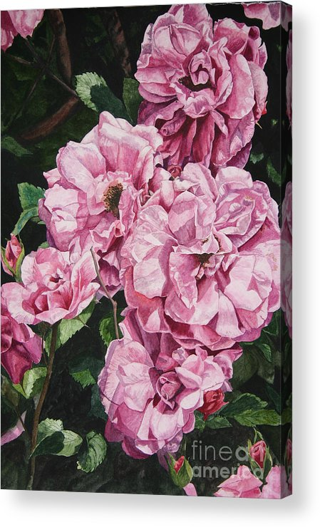 Floral Acrylic Print featuring the painting Ramblin Rose by Helen Shideler