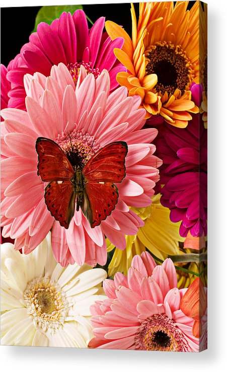 Butterfly Daisy Wings Flower Flowers Petal Petals Floral Acrylic Print featuring the photograph Red Butterfly On Bunch Of Flowers by Garry Gay