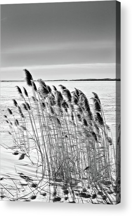 Black And White Acrylic Print featuring the photograph Reeds On A Frozen Lake by Peter Pauer