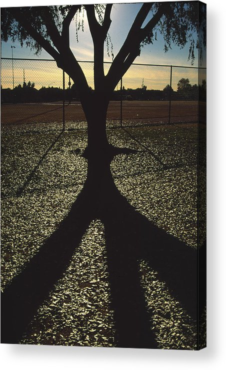 Tree Acrylic Print featuring the photograph Reflections In A Park by Randy Oberg